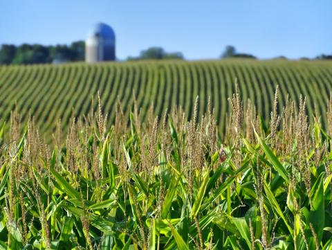 The Problems Of Industrial Agriculture Now And For The Future Frontier Group